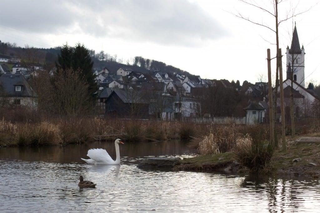 Schwan und Ente auf der Ruhr, im Hintergrund eine Kirche