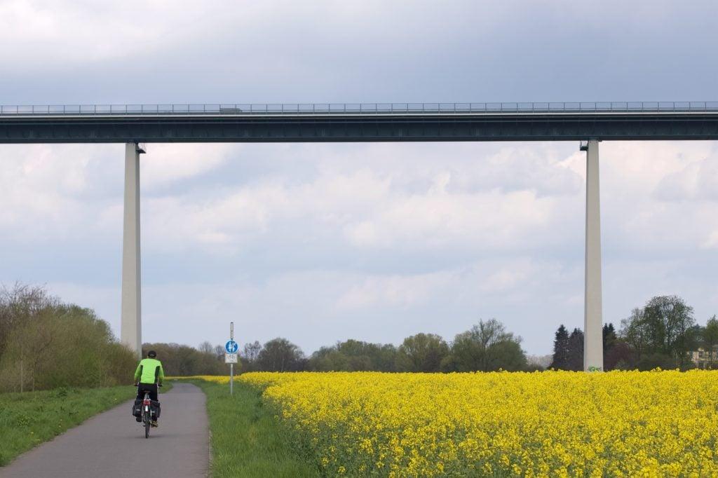 Ein blühendes Rapsfeld rechts, links ein Radfahrer auf einem asphaltierten Weg, im Hintergrund die hohe und breite Ruhrtalbrücke
